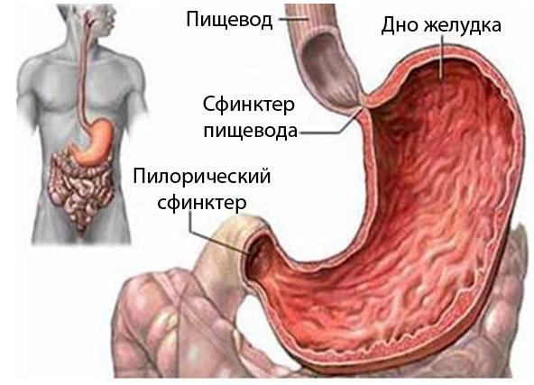 рак кишечника фото схема