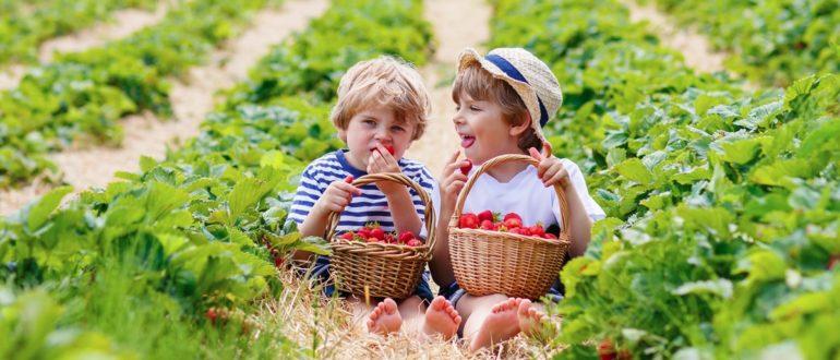 Дети вегетарианцы фото